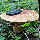 Белый гриб настоящий (Boletus edulis)