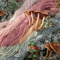 Паутинник кровяно-красноватый (Cortinarius semisanguineus)