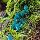 Хлороцибория сине-зеленоватая (Chlorociboria aeruginascens)