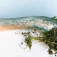 Плютей ивовый (Pluteus salicinus). Ножка.