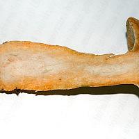 Рыжик еловый (Lactarius deterrimus)