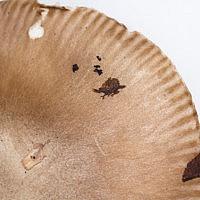 Мухомор болотный (Amanita paludosa)